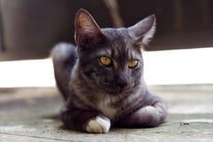 Милый серый кот лежа на том основании Стоковое Изображение