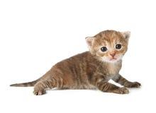 Милый серый striped котенок Стоковое фото RF