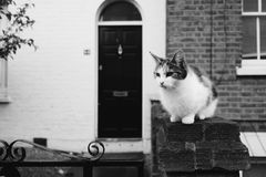Милый сельский кот в черно-белом Стоковое Фото