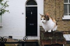 Милый сельский кот Стоковые Фотографии RF
