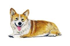 Милый силуэт собаки акварели на белой предпосылке иллюстрация штока