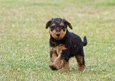 Милый смешной пушистый маленький щенок бежать outdoors стоковое изображение