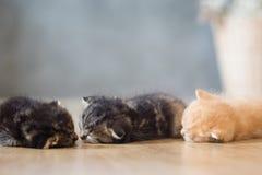 Милый сон котенка на деревянном поле Стоковое Изображение