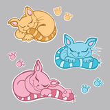 милый спать котят Стоковое Изображение