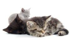 милый спать котят стоковое изображение rf