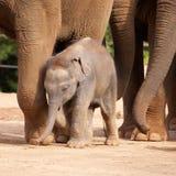 Милый слон младенца Стоковые Изображения RF
