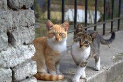 Милый унылый черный белый кот Стоковые Фотографии RF