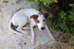 Милый унылый щенок Стоковое Фото