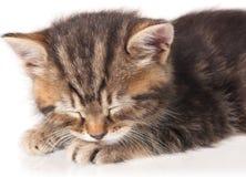 Милый уснувший котенок Стоковая Фотография