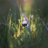 Милый цветок маргаритки Стоковые Фото