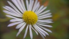 милый цветок Стоковое Изображение RF