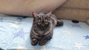 Милый черный кот дыма видеоматериал