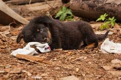 Милый черный щенок бездомной собаки Стоковые Изображения