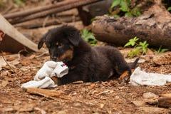 Милый черный щенок бездомной собаки Стоковая Фотография RF