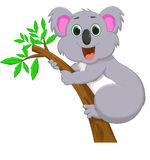 Милый шарж коалы на дереве Стоковые Изображения