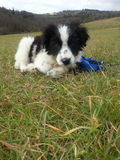 Милый щенок в траве Стоковая Фотография