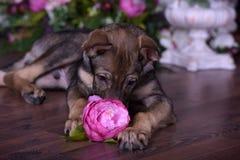 Милый щенок лежа на поле с цветками Стоковые Фотографии RF