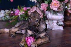 Милый щенок лежа на поле с цветками Стоковое Изображение