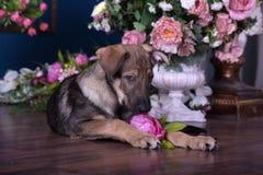 Милый щенок лежа на поле с цветками Стоковое фото RF