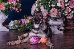 Милый щенок лежа на поле с цветками Стоковые Фото