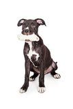 Милый щенок держа косточку в рте Стоковые Фото
