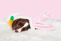 Милый щенок зайчика пасхи Стоковое фото RF