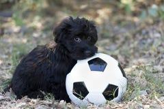 Милый щенок застенчивый стоковая фотография