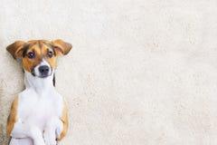 Милый щенок на ковре Стоковые Фото