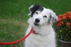Милый щенок представляя цветками стоковая фотография