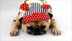 Милый щенок собаки мопса с остатками спать платья и шляпы солдата костюма на поле изолированном на белизне акции видеоматериалы