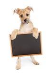 Милый щенок терьера держа пустую доску мела стоковые фотографии rf