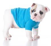 милый щенок Стоковое фото RF