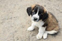 милый doggy Стоковое Фото