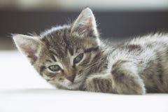 Милый striped котенок смотря камеру Стоковая Фотография