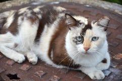 Милый striped кот улицы Стоковая Фотография