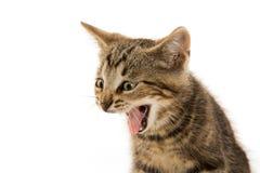 милый tabby котенка стоковое фото rf