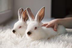 2 милых белых кролика на windowsill Стоковые Фото