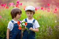 2 милых дети дошкольного возраста, братья мальчика, в поле мака, holdi Стоковое Изображение