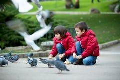 2 милых дет, братья мальчика, подавая голуби в парке Стоковое Изображение