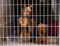 2 милых заблуженных собаки в укрытии собаки стоковые фото