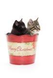 2 милых котят в ведре Стоковые Изображения RF