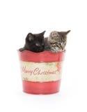2 милых котят в ведре Стоковые Фото