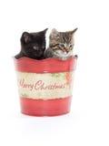 2 милых котят в ведре Стоковое Изображение