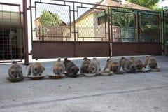 10 милых щенят есть в дворе Стоковое фото RF