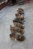 10 милых щенят есть в дворе Стоковое Изображение