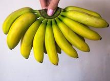 Младенец банана в крупном плане Крупный план зеленых и желтых бананов младенца, вертикального аспекта Стоковое Изображение RF
