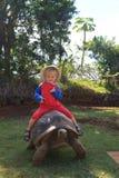 Младенец гигантская черепаха Стоковое фото RF