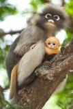 младенец ее обезьяна Стоковое Фото