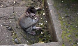 младенец есть обезьяну Стоковые Фотографии RF