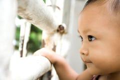 младенец заметливый стоковое изображение rf
